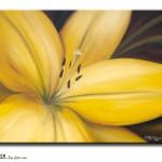 FL #1104 Yellow 3