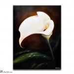 FL #0901 White Calla Lily